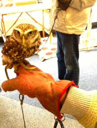 owl hand